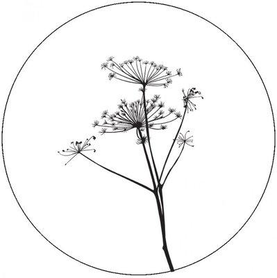 Muurcirkel 40 cm wit berenklauw